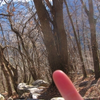 fingerwald