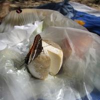 schmetterlingkaese